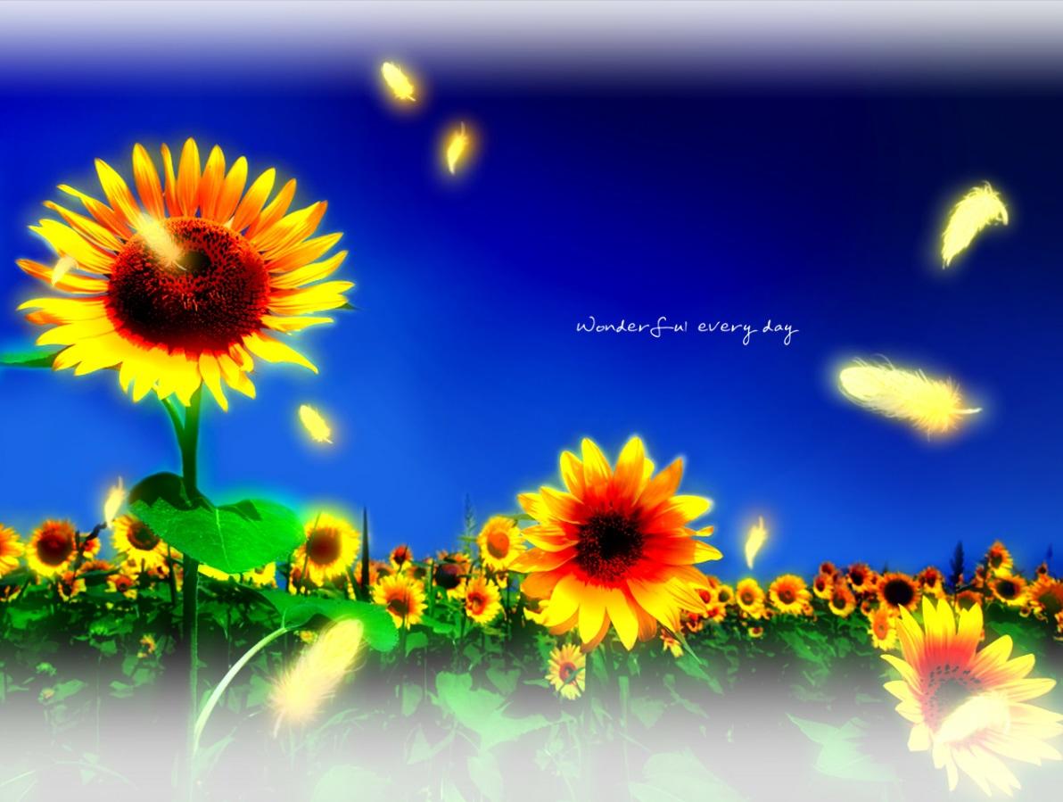 Wonderful Everyday Sunflowers Girasoles reseña